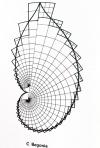 begonia_fibonacci_web
