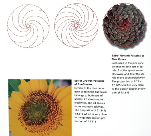 fibonacci1_pinecone_sunflower_web