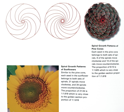 fibonacci1_pinecone_sunflower_web