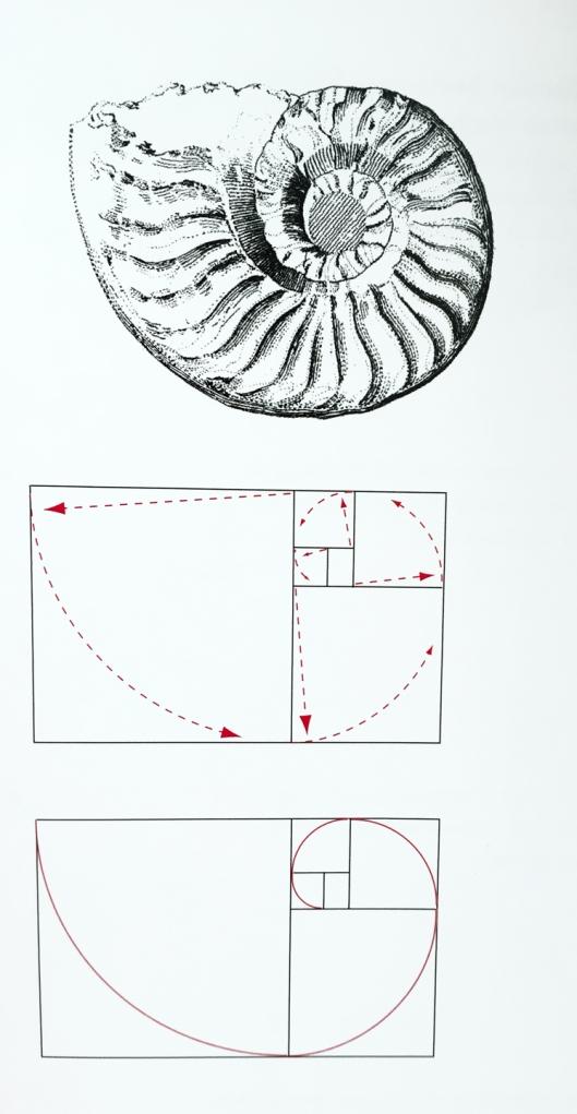 snail_fibonacci1_web