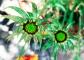 galardiabloomgreen_web