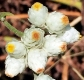 whitepetalsfocus_web