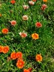 floraltapestry_web