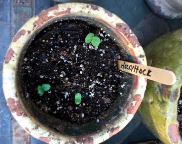 seedlings5