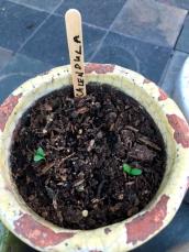 seedlings7