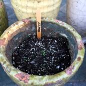 seedlings8